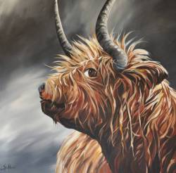 Highland Coo - 'Anderson'