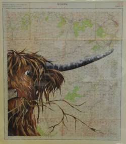 OS Highland Coo - 'Selkirk'
