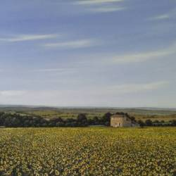 Sunflower vista - France